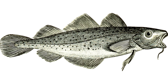 Detailed drawing of a cod fish